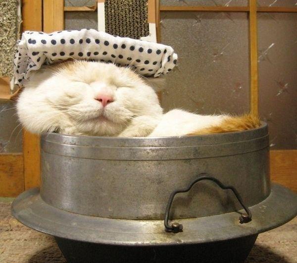Болит головушка у котика