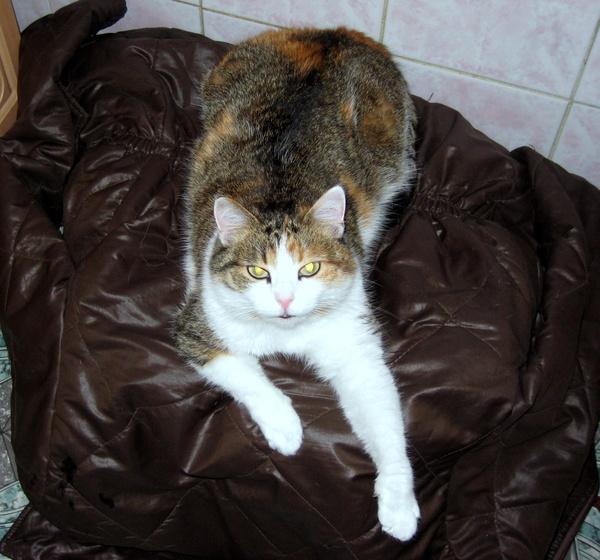кошка Пузякина