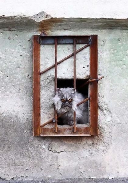 Кот строгого режима