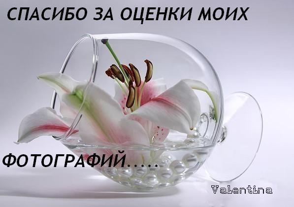 Стройнею,не сдаюсь.Позади 120 кг.Иду к 80 ...: www.dietaonline.ru/community/post.php?topic_id=44474&page=97