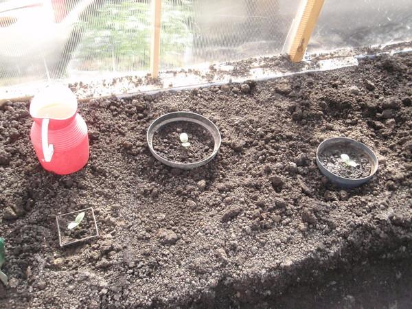 Чем обрабатывать капусту в домашних условиях
