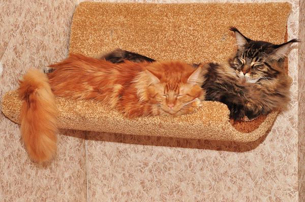 Настенный гамак для кошки