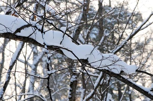 Фото Зимние пейзажи, середина декабря