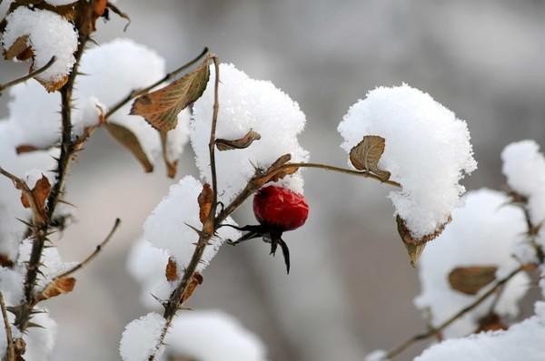 Фото Зимний пейзаж, середина декабря