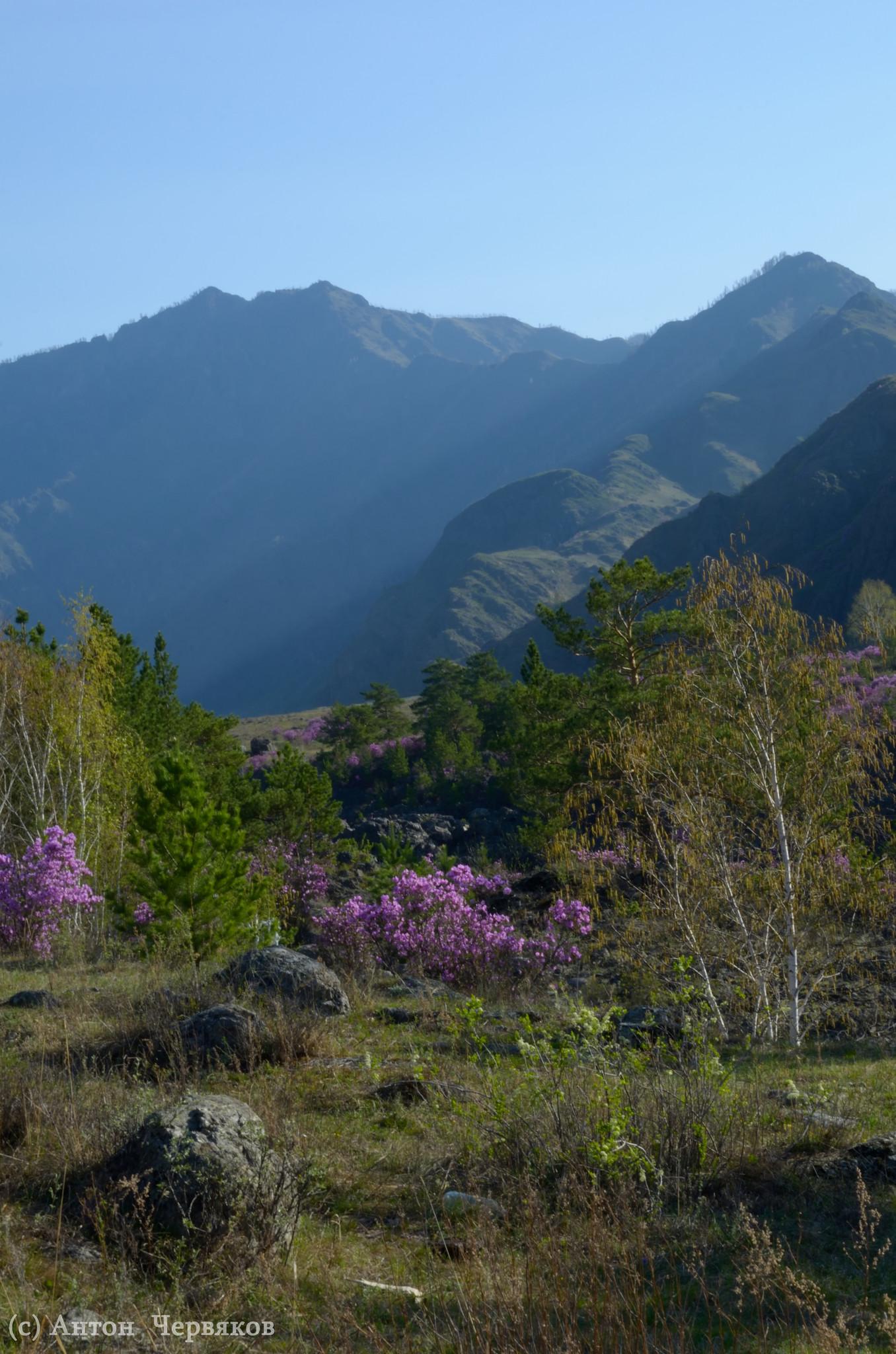 Весна-2013 в горах Алтая
