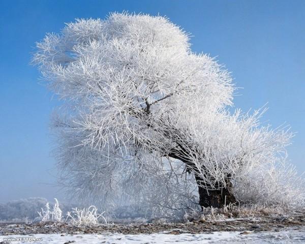 Зимние пейзажи I-9609