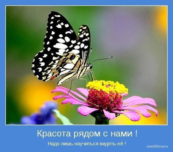 Красота рядом с Вами
