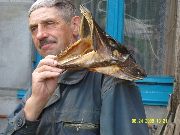 Русская рыбалка волхов золотая блесна
