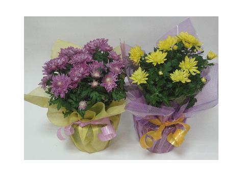 как упаковать цветы фото:
