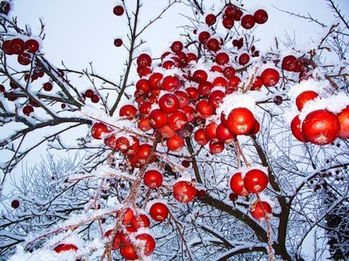 Зайцевнет вы можете бесплатно скачать и слушать онлайн песню яблоки на снегу (михаил муромов)
