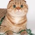 6-7 марта 2011 года в Волгограде пройдет международная выставка кошек.