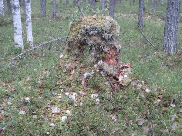 http://content.foto.mail.ru/mail/argon84/695/i-748.jpg