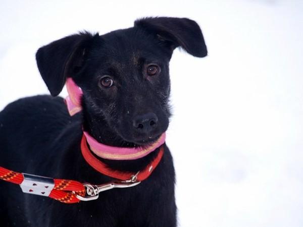 Санкт-Петербург, SOS! Хозяева выгнали на улицу собаку со щенками…