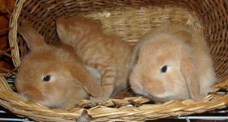 http://content.foto.mail.ru/mail/aturai2005/leto/i-797.jpg