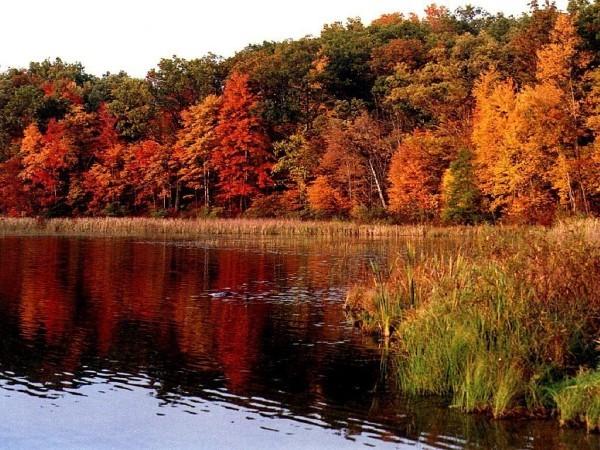 Как красива природа - в любое время года.