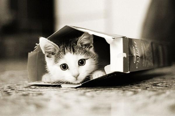 Смотреть дружба кошки и крысы 6 фото