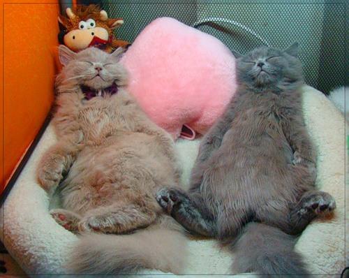 Кошки и прочие забавные животные  I-679