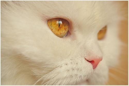 Глаза в темноте белой кошки