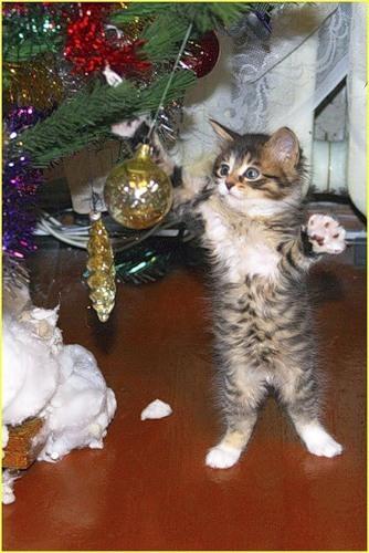 Кошки и прочие забавные животные  I-809