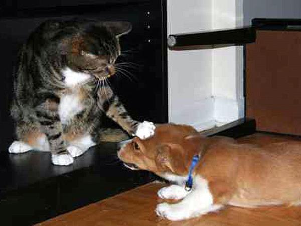 Картинки коты и щенки