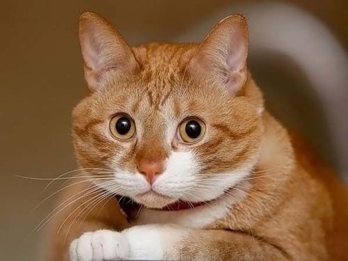 Фото прикольных кошек котов и котят
