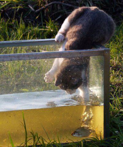 котик ловит рыбку скачать торрент - фото 5