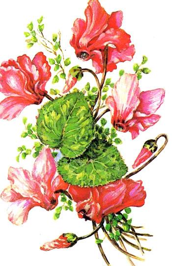Цветок валентина в картинках