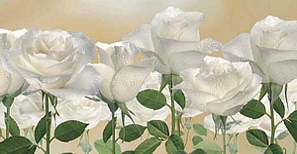 """Оригинал - Схема вышивки  """"Белые розы """" - Схемы автора  """"zarevna """" - Вышивка крестом."""