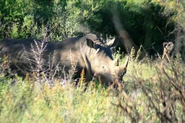 Снова в ЮАР, или 10 перелетов за 14дней, часть 11