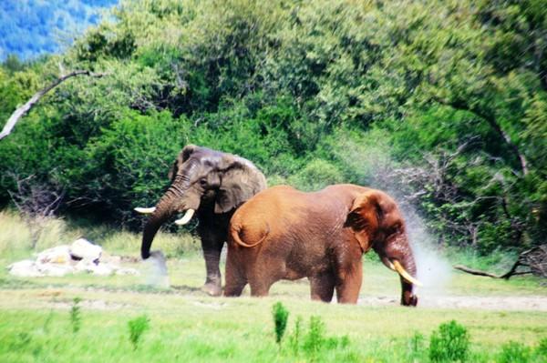 Снова в ЮАР, или 10 перелетов за 14 дней, Часть 12
