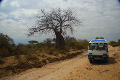 Африканская мечта детства. Часть 5. Луковое поле и баобабы.