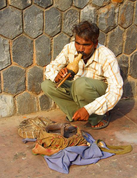 Животные Индии. Дели.