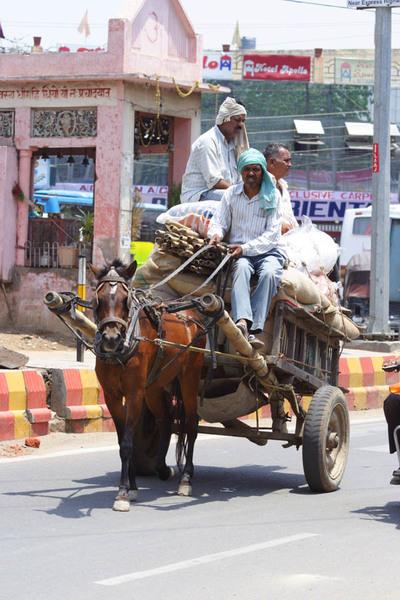 Животные Индии. Агра.