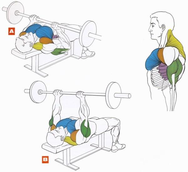 Как накачать грудные мышцы эффективные упражнения на грудь.