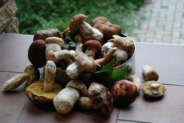 http://content.foto.mail.ru/mail/colibri64/1/i-141.jpg