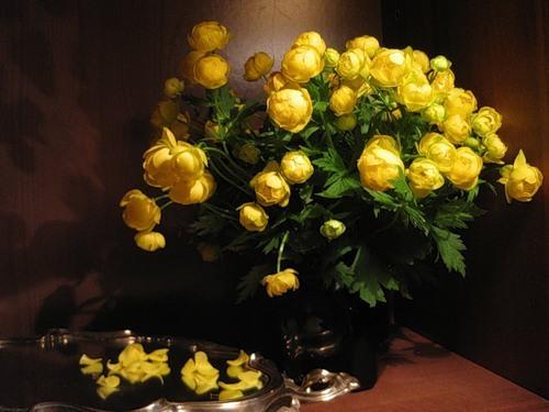 Фото таежные цветы