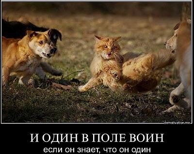 Год Кота на astrology-online.ru