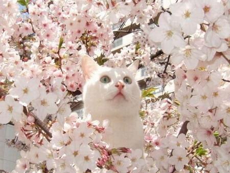 Весна и год Кота на astrology-online.ru