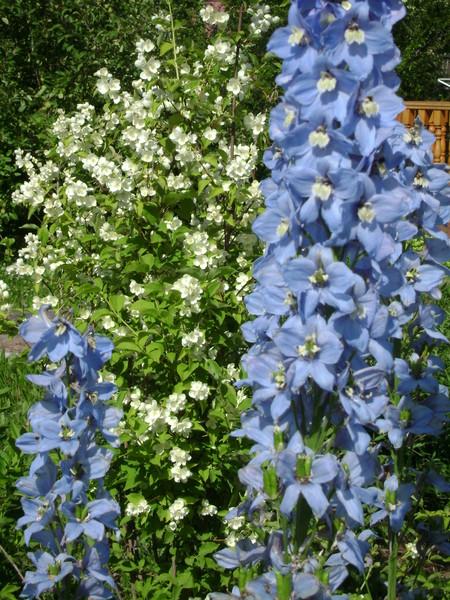 Цветы кливия и названия и уход 46