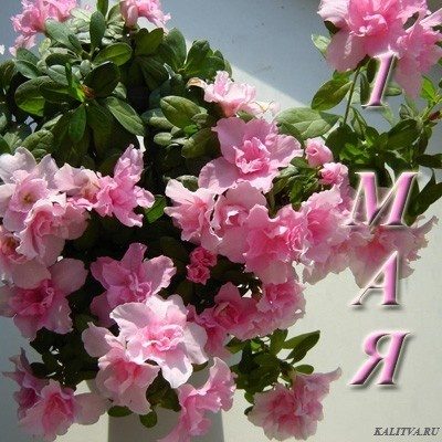 http://content.foto.mail.ru/mail/diva.ru/_blogs/i-748.jpg