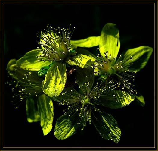 Могут быть красивы зеленые цветы