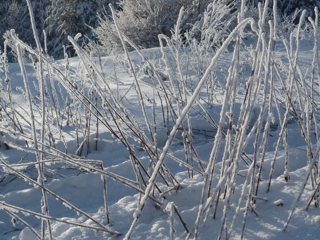 Горные лыжи в Хвалынске - январь 2011