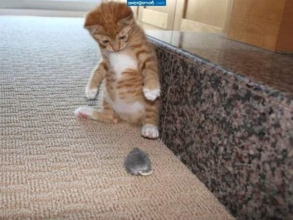Как узнать что кот заболел