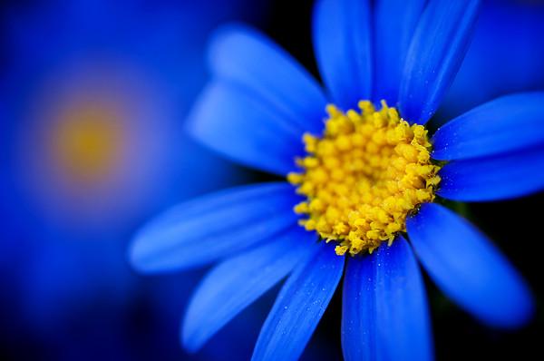 Чем интересны синие цветы они