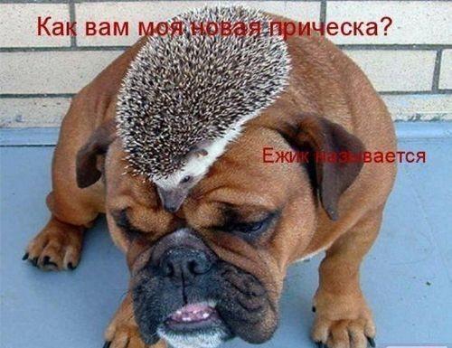 http://content.foto.mail.ru/mail/dom.krasnoyarsk/58/i-256.jpg