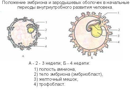 Беременность после внематочной