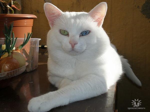 У кошки болит животик у кошки болезнь