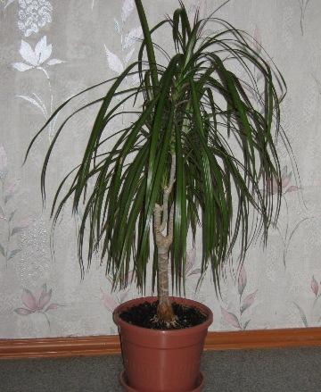 Уход за комнатными растениями Теория и практика