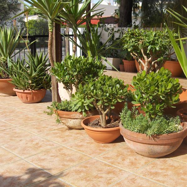 Комнатные растения в СанктПетербурге СПб магазин
