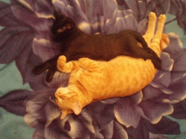 Фото рыжая девушка и черная кошка